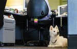 dog_office-300x193.jpg