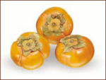 persimmon_2.png